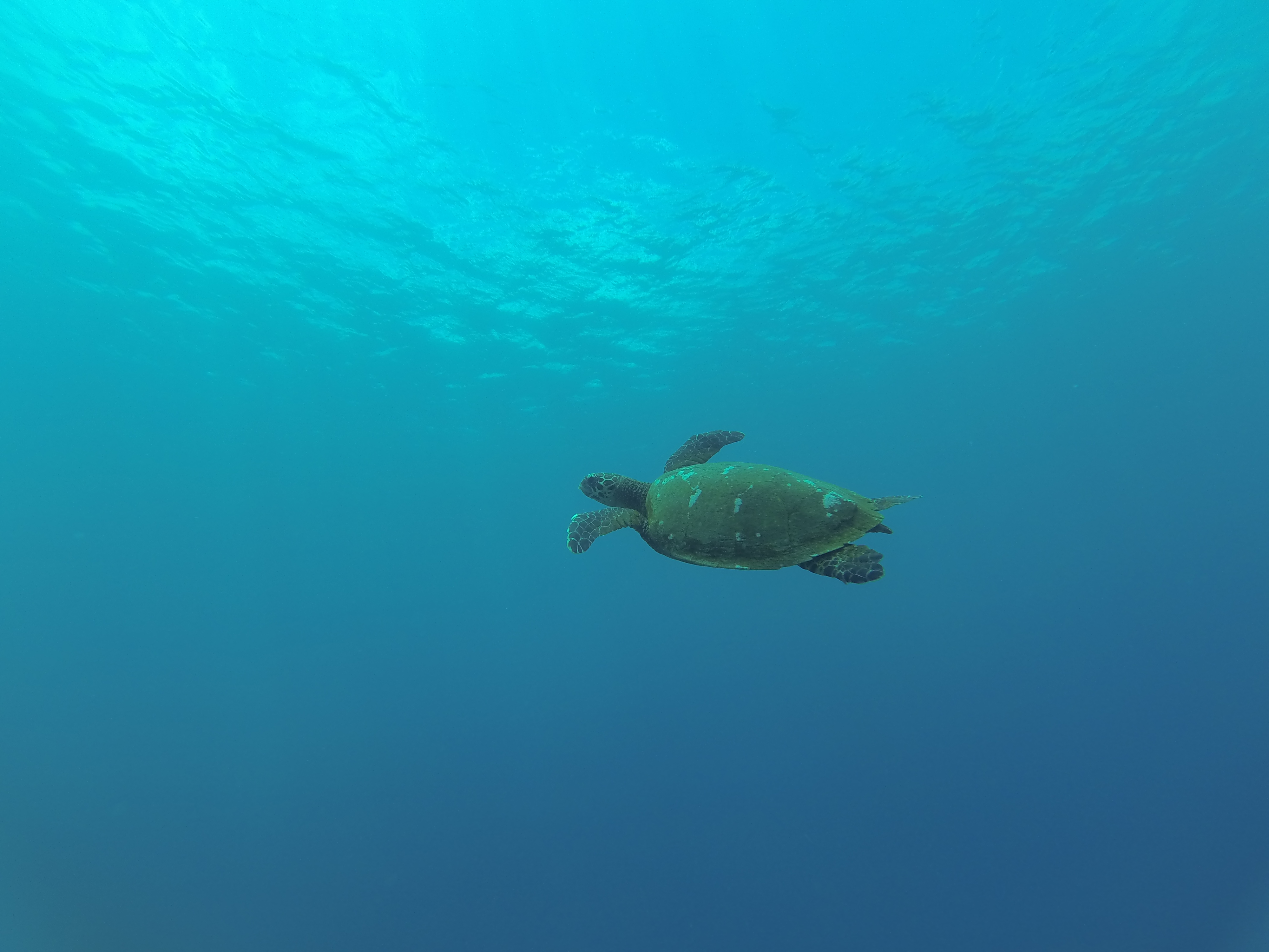 diving in savai'i