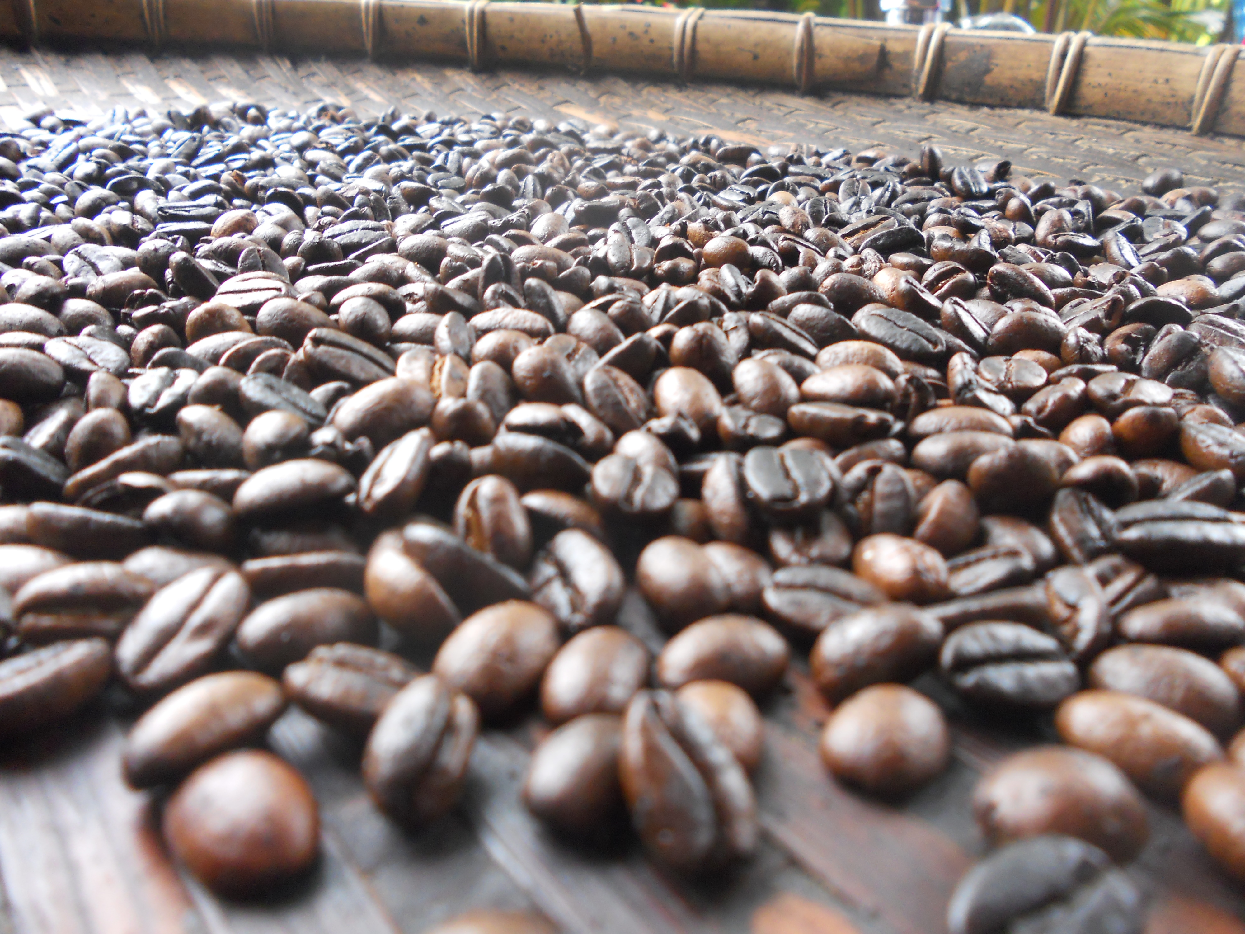 graines de cafe