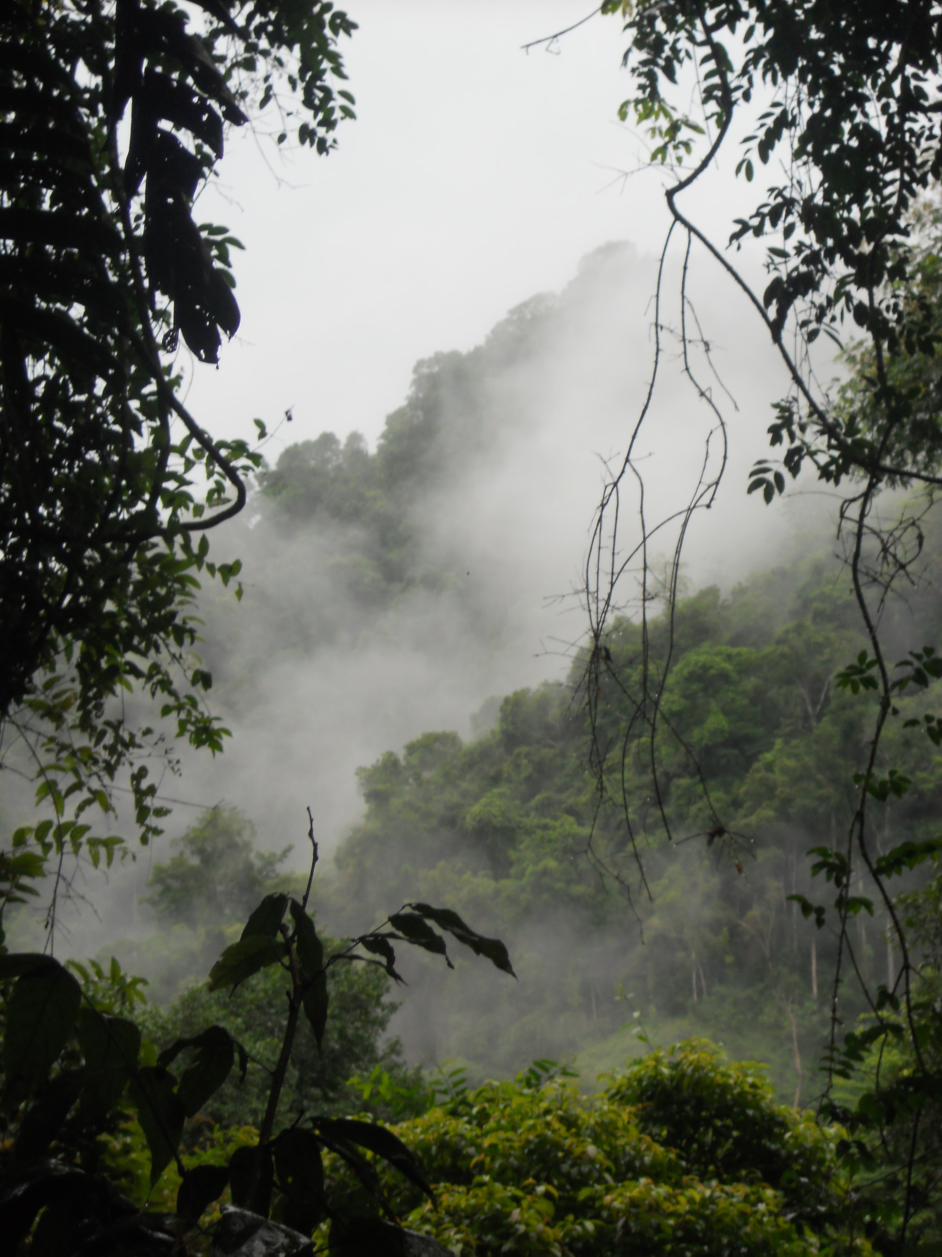 jungle trek in Laos