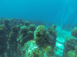 underwater musueum
