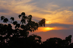 sunset in Amazon forest