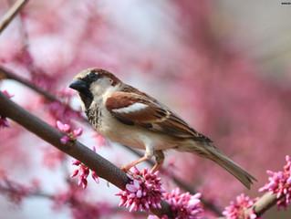 The Birds Gallery