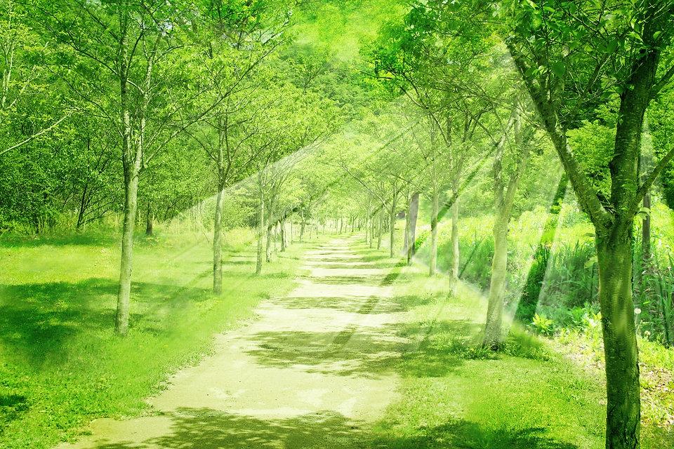 森林の光M.jpg