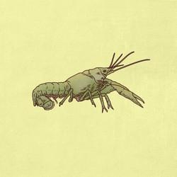 Crayfish_
