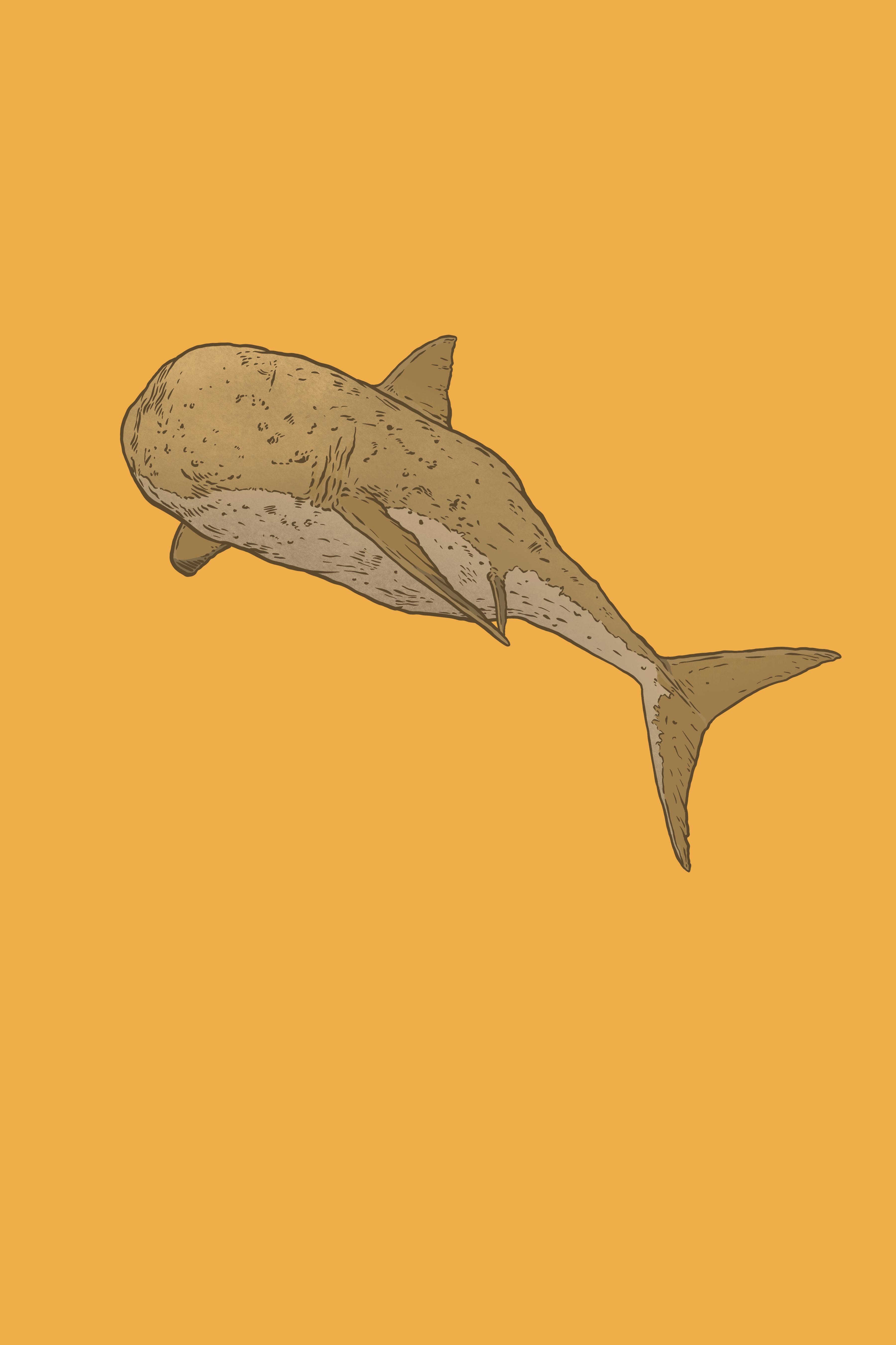 Spud_Shark