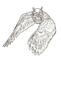 skull harpy.jpg