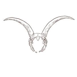 taurus skull.jpg
