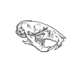 Hamster_Skull.jpg