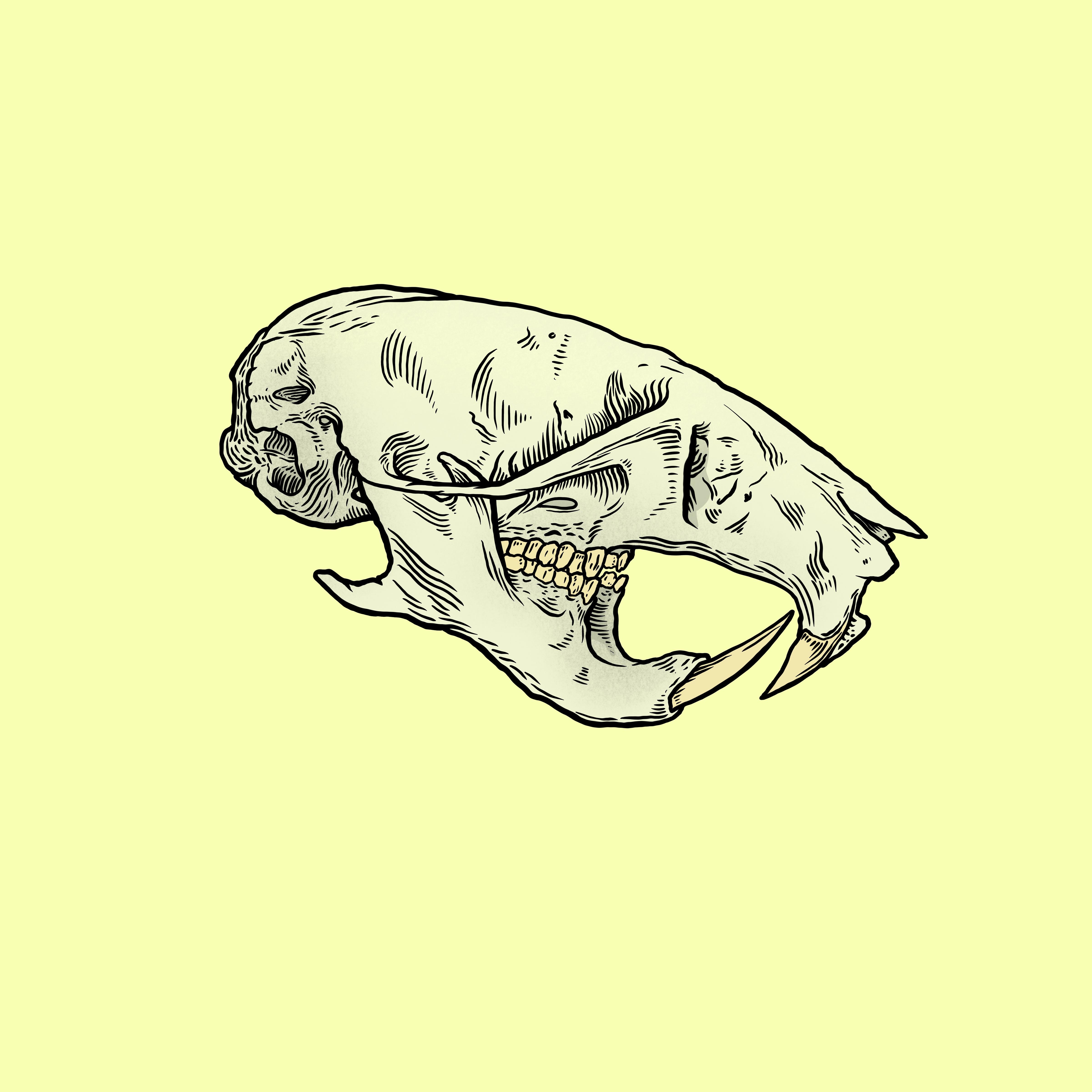 Hamster_Skull