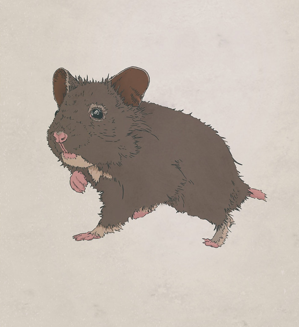 Brown Bear Hamster.jpg