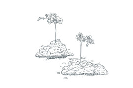 Double_Orchid_Cloud.jpg
