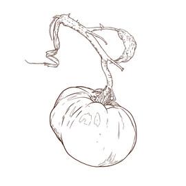 tomato on a vine.jpg