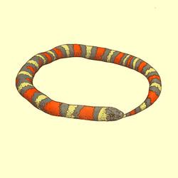 Little snake oro color