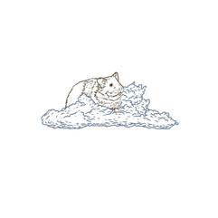 hamster cloud 2.jpg