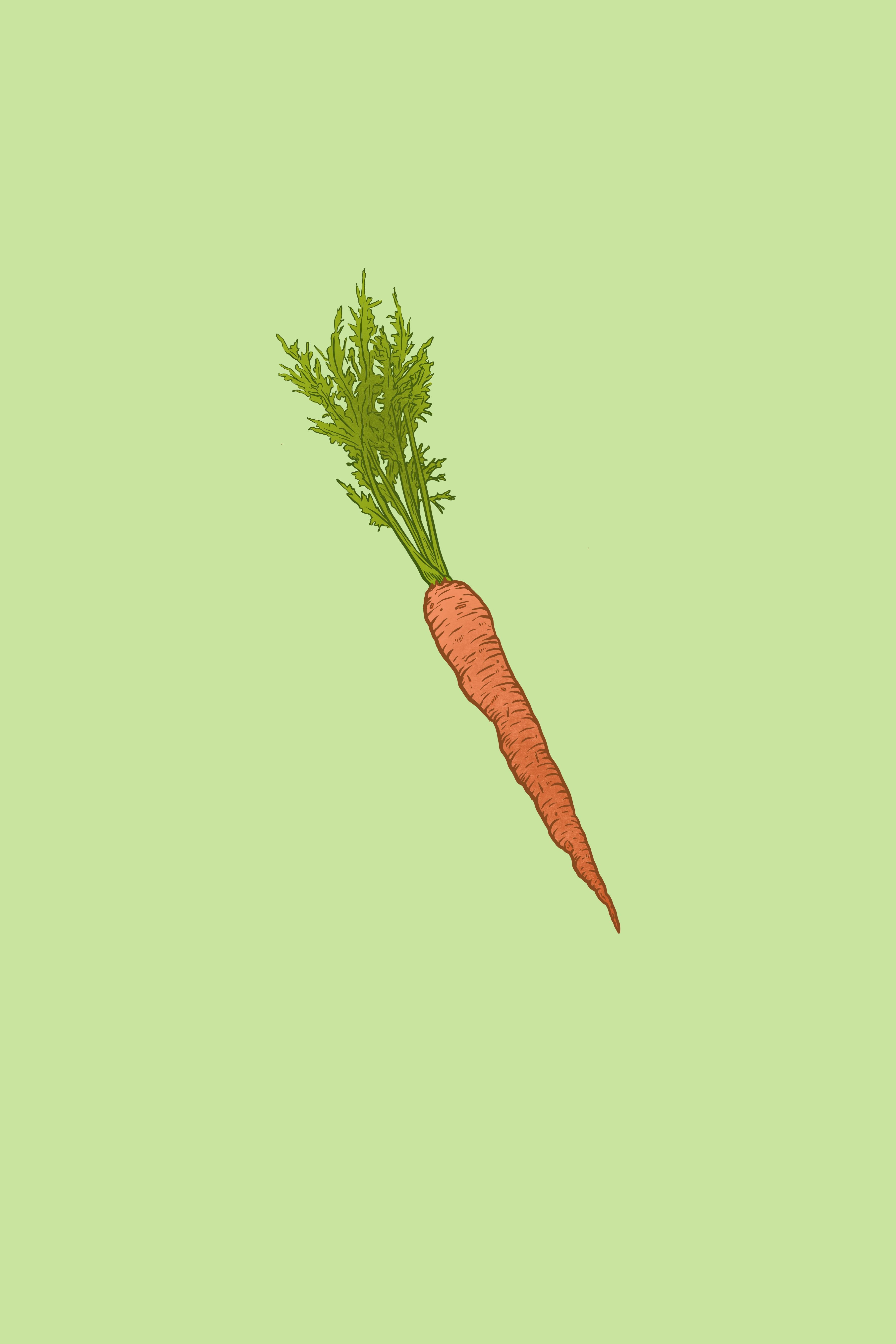 Carrot_2