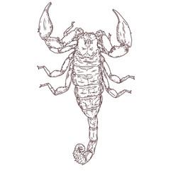 Scorpion_3.jpg