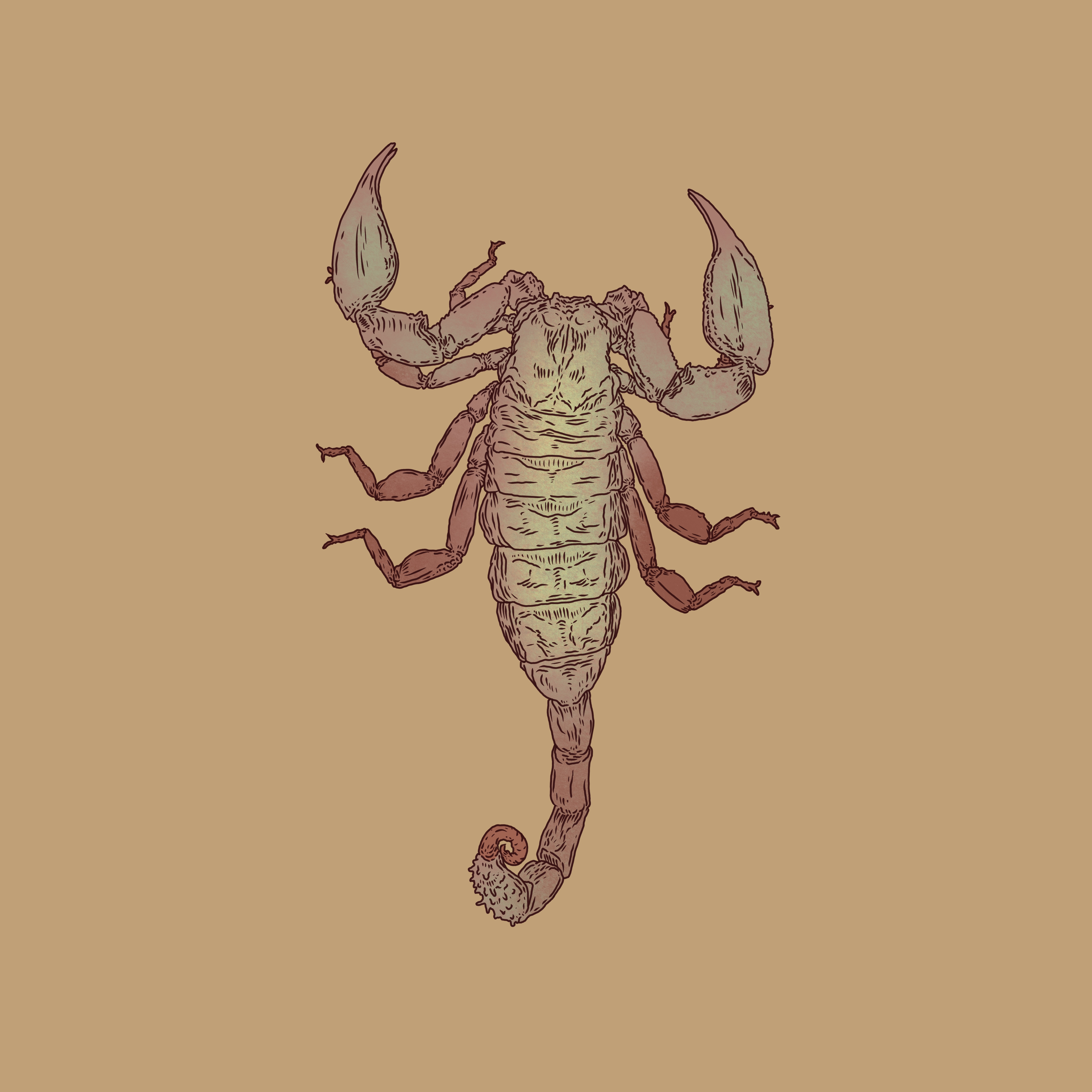 Scorpion_1