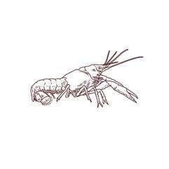 Crayfish_.jpg