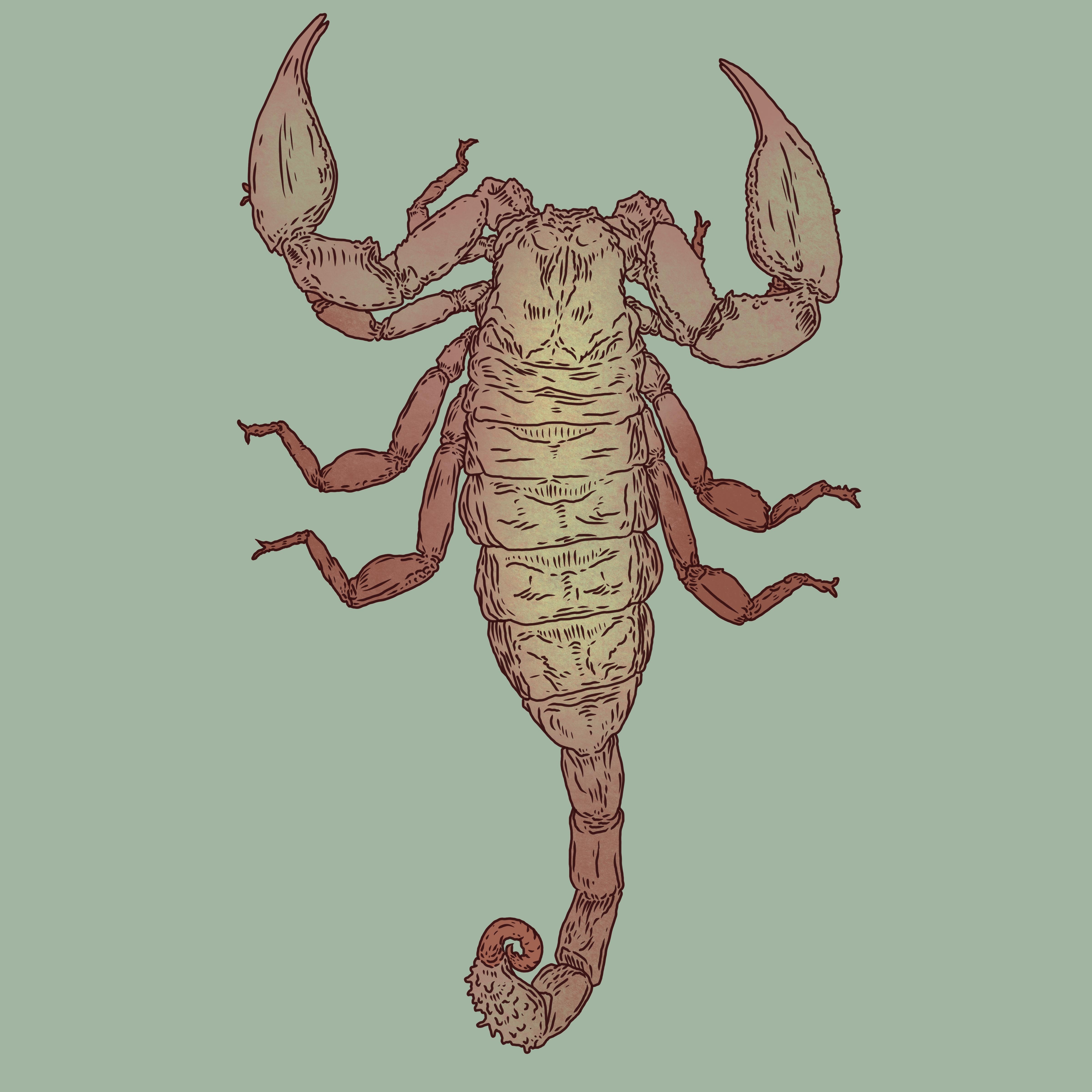 Scorpion_3