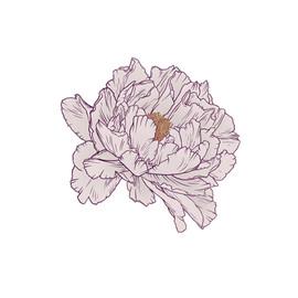 pink peonie blossom.jpg