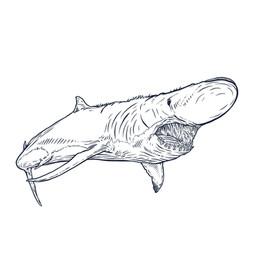 Shark_Finger!.jpg