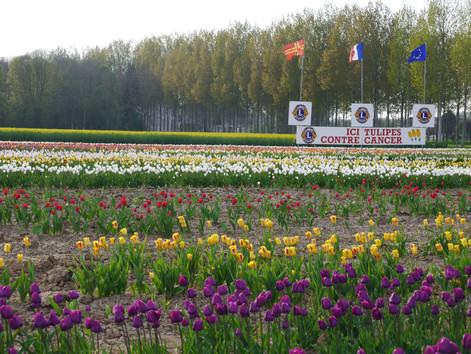 21ème course des tulipes contre le cancer