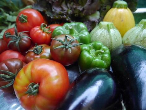 Pour avoir des légumes frais, de saison et bio : l'AMAP