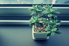 plant-2592558_1280.jpg