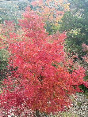 第一回 11月21日(土)・箕面の滝_201122_0.jpg
