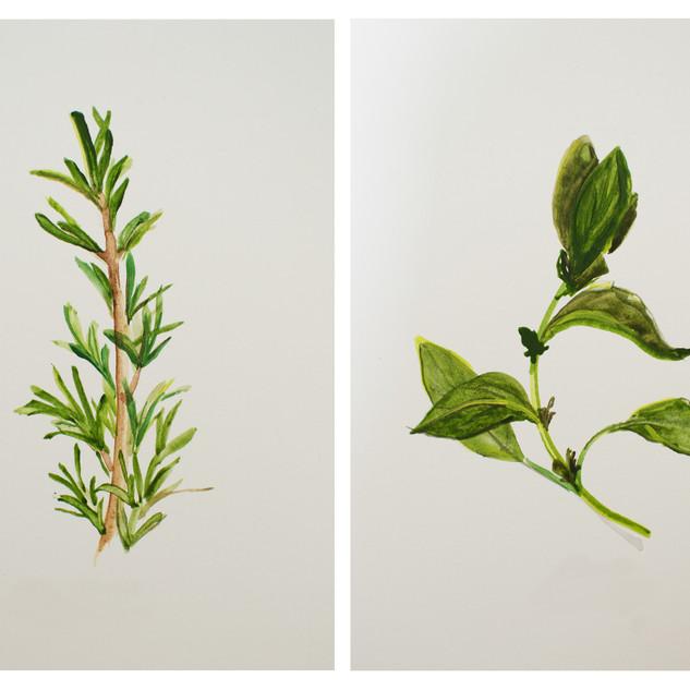 Fine Art Herbs 1