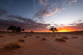 New Dune