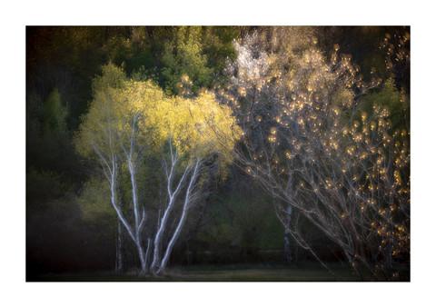 001-etats arbres-Pruniaux-print-v2.jpg
