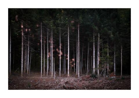 016-etats arbres-Pruniaux-print-v2.jpg