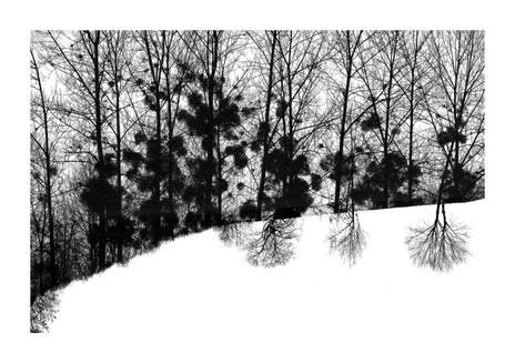 010-etats arbres-Pruniaux-print-v2.jpg