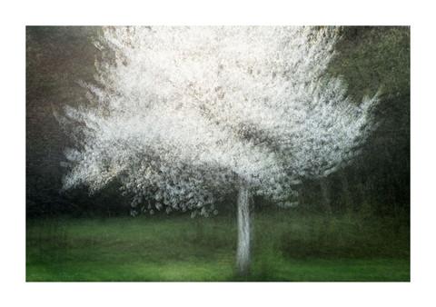 005-etats arbres-Pruniaux-print-v2.jpg