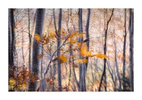 011-etats arbres-Pruniaux-print-v2.jpg