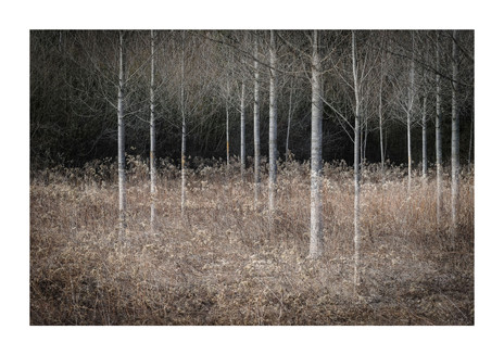 014-etats arbres-Pruniaux-print-v2.jpg