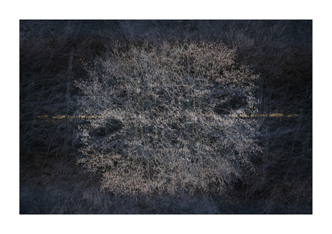 002-etats arbres-Pruniaux-print-v2.jpg