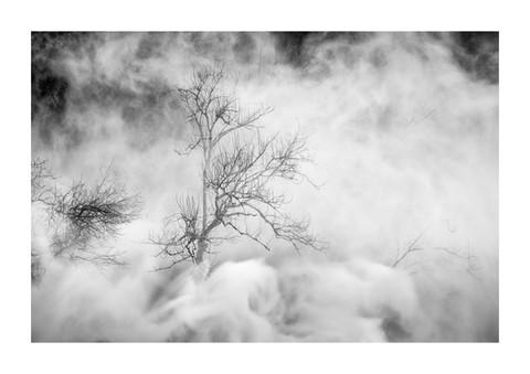 008-etats arbres-Pruniaux-print-v2.jpg