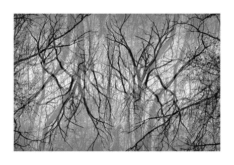 012-etats arbres-Pruniaux-print-v2.jpg