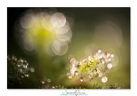 01-Drosera-pruniaux.jpg