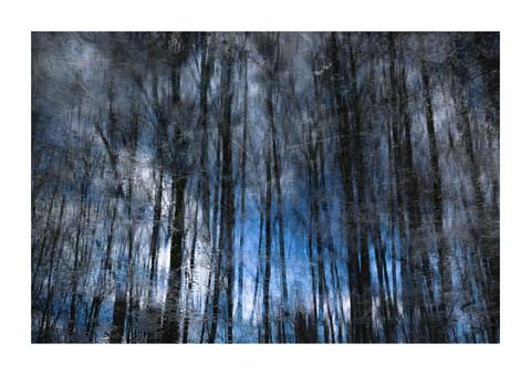 009-etats arbres-Pruniaux-print-v2.jpg