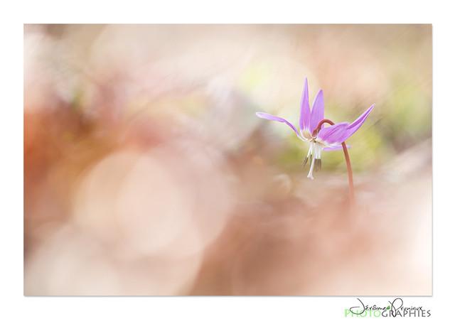 03-Serie_Erythrone.jpg