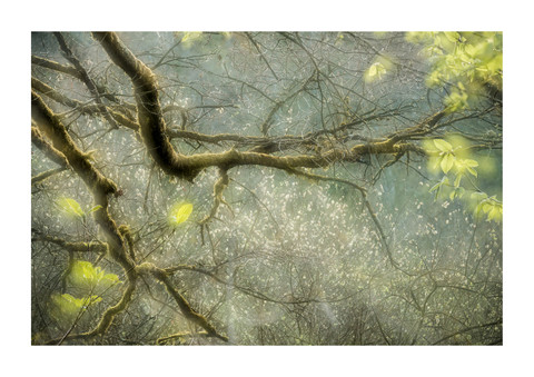 006-etats arbres-Pruniaux-print-v2.jpg