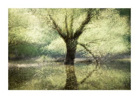 003-etats arbres-Pruniaux-print-v2.jpg