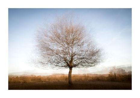004-etats arbres-Pruniaux-print-v2.jpg