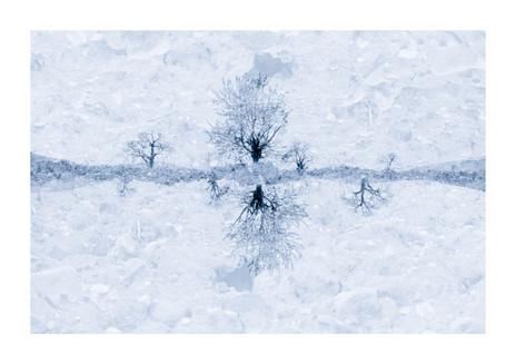 013-etats arbres-Pruniaux-print-v2.jpg