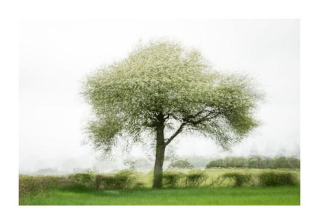 007-etats arbres-Pruniaux-print-v2.jpg
