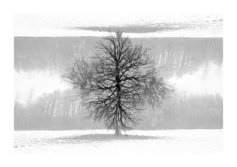 015-etats arbres-Pruniaux-print-v2.jpg