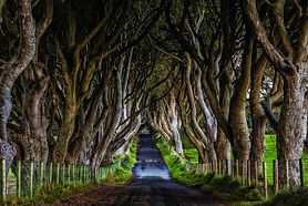 Dark-Hedges-Ireland.jpg